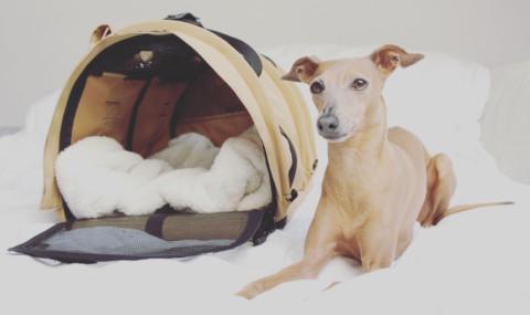 Lola über den Wolken: So läuft ein Flug mit Hund in der Kabine ab