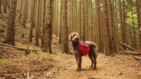 Bobby will Harzer Wanderkaiser werden
