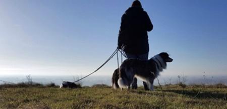Hermannsweg mit Hund