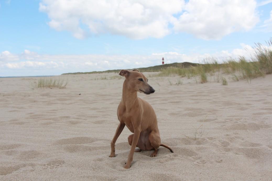 miDoggy Urlaub am Meer mit Hund 2