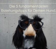 Die 5 fundamentalsten Erziehungstipps für Deinen Hund