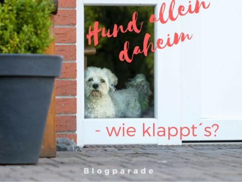 """""""Hund allein daheim – wie klappt's"""""""