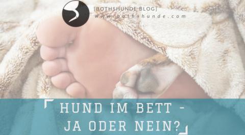Bettgeschichten [Hund im Bett – ja oder nein?]