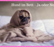 [miDoggy-Parade] Hund im Bett – ja oder nein?