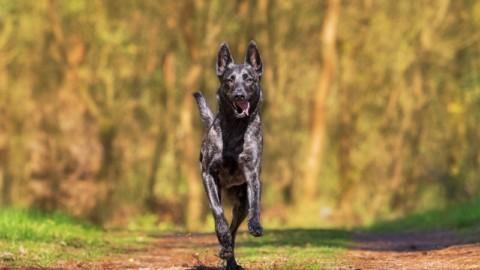 Hund ohne Leine? Das sollten Hundebesitzer wissen!