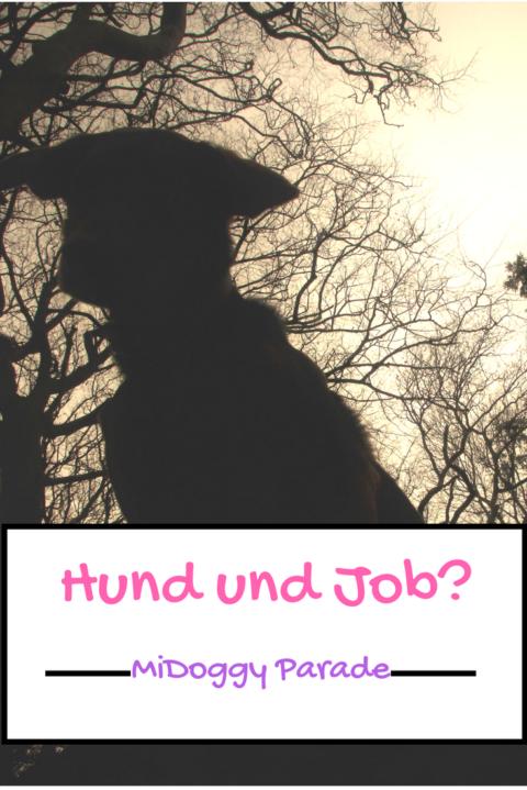 [MiDoggy Blogparade] Hund und Job-geht das?