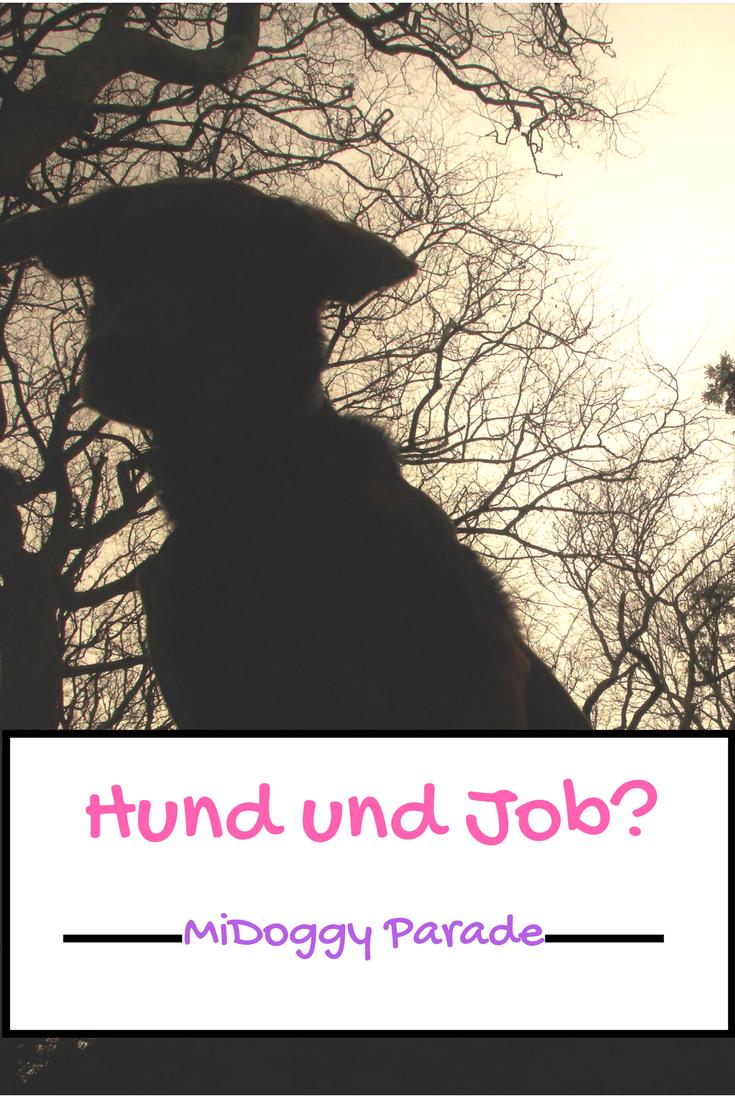 Hund und Job