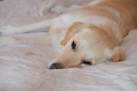 [MiDoggy Blogparade] Hund im Bett – Ja oder Nein?