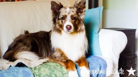 Hund und Job – oder auch Hund allein Zuhause