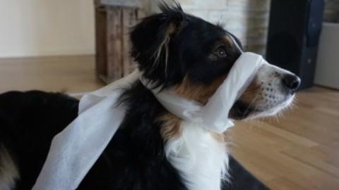 Erste-Hilfe am Hund – der Schockzustand