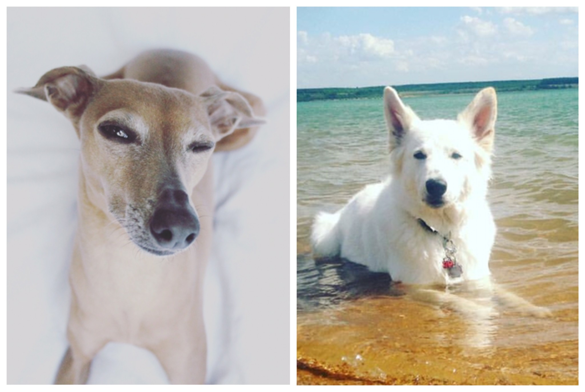 Hundeblogger-Domino-Hundekind-Abby %Hundeblog