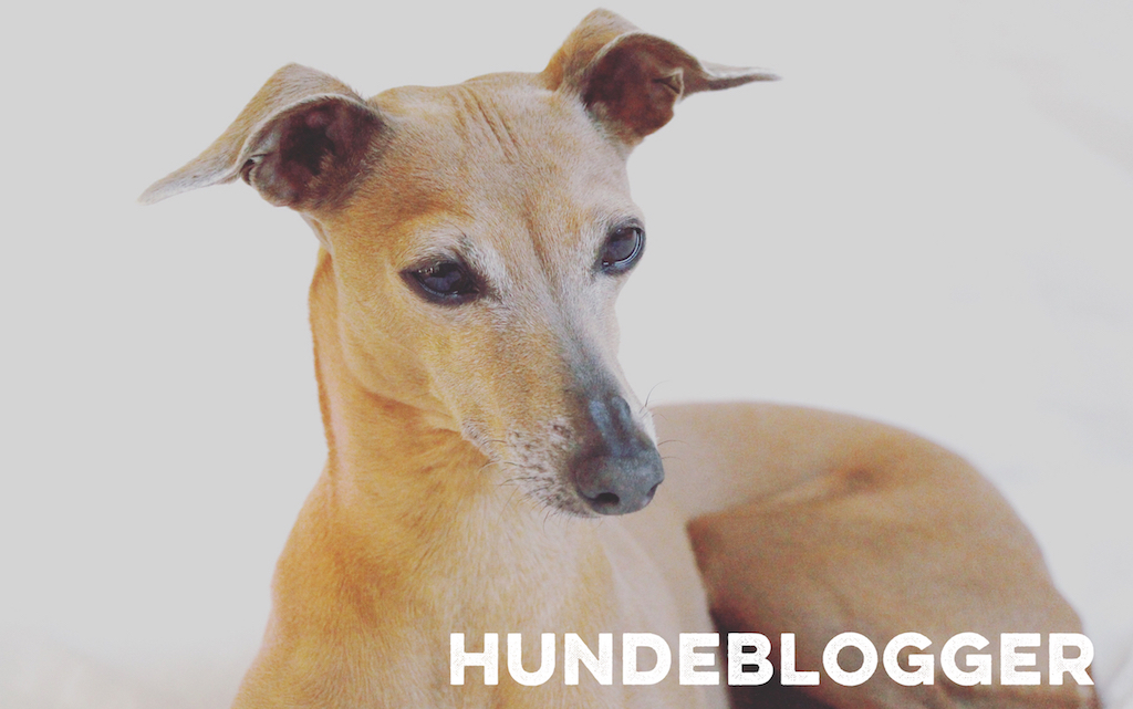 Hundeblogger miDoggy Community