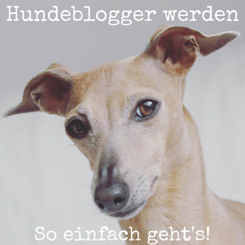 Hundeblogger werden