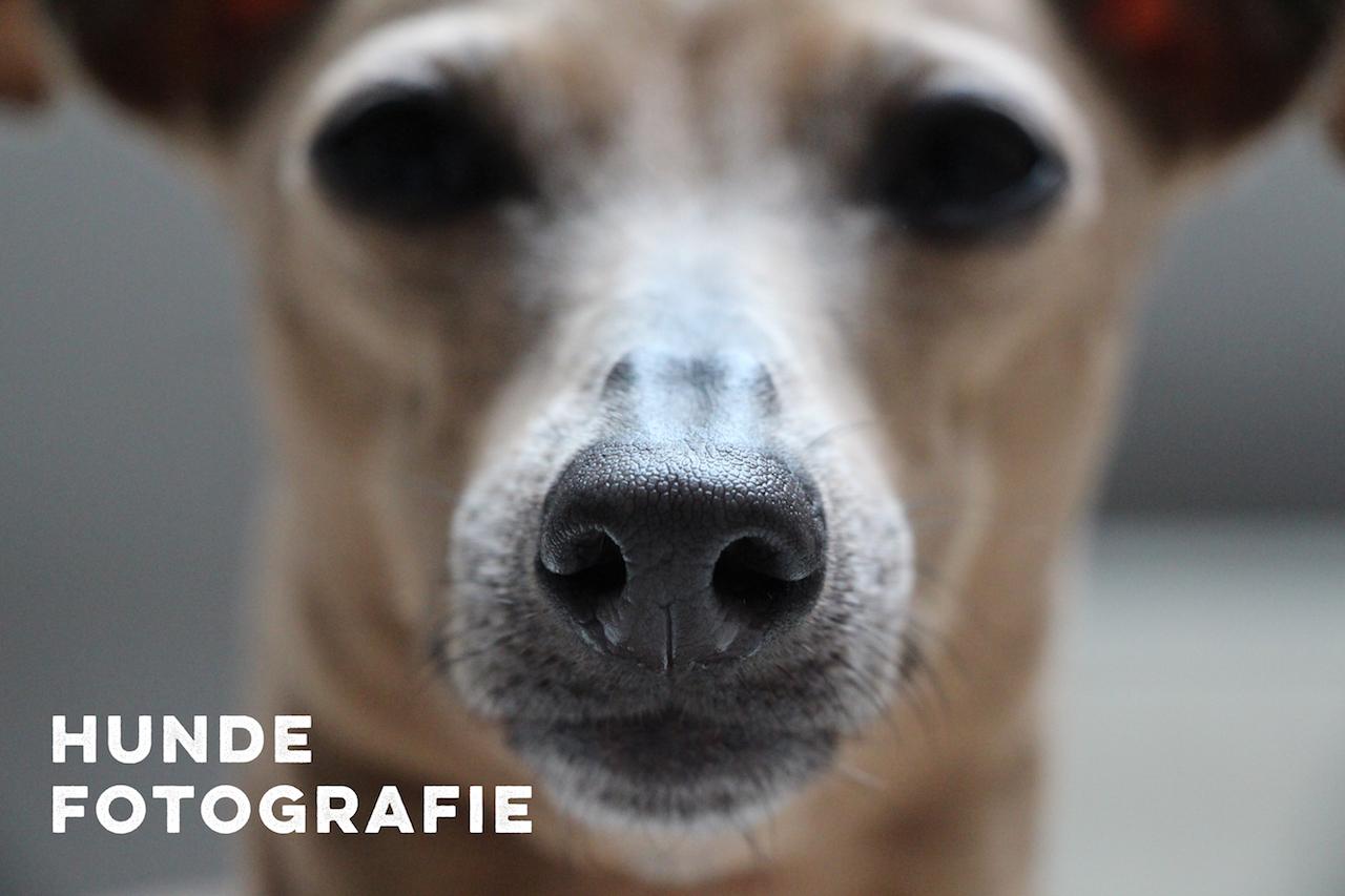 Hundefotografie miDoggy