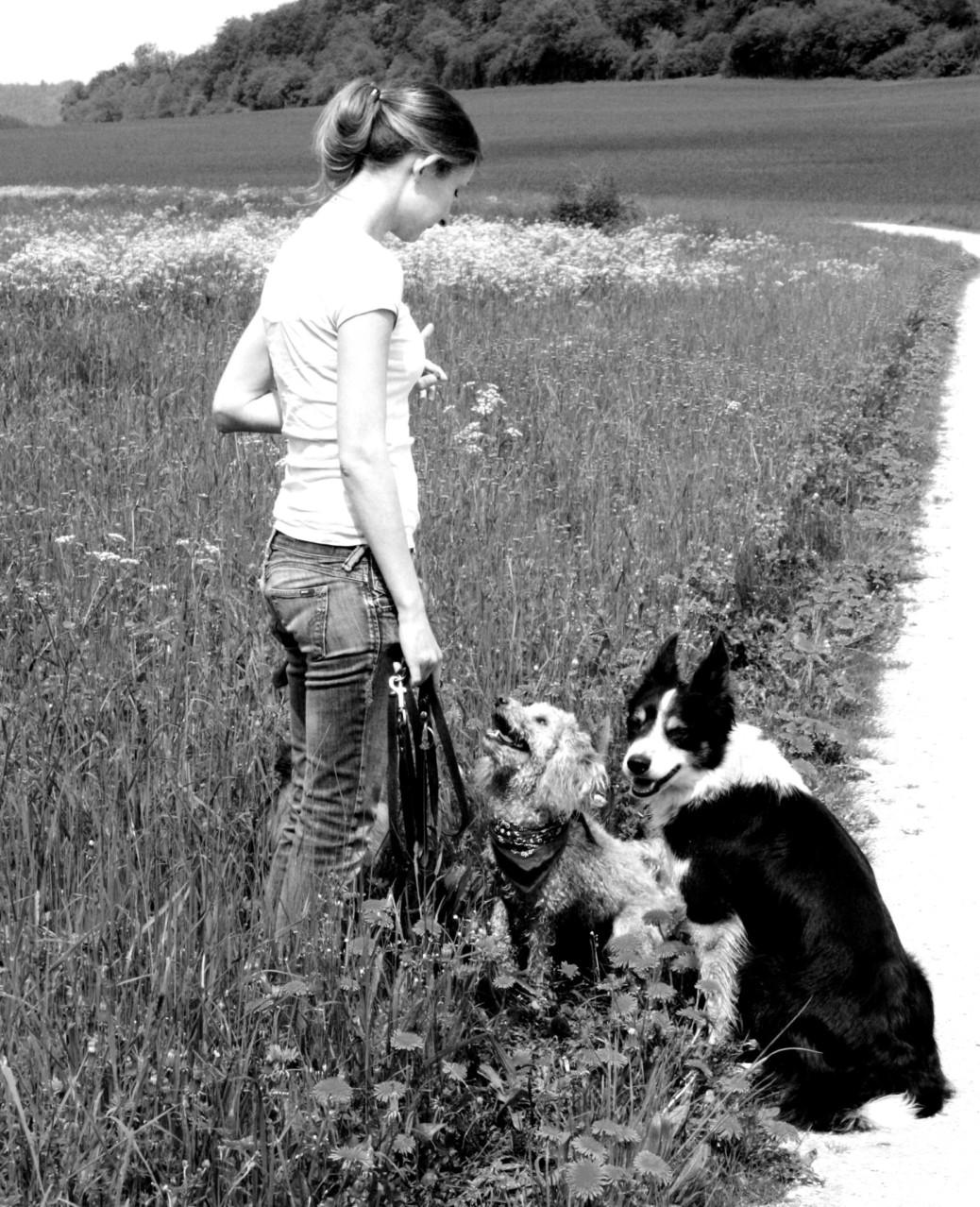Hundehalter Wohlstandshund