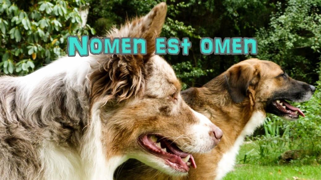 hundenamen-und-charaktereigenschaften