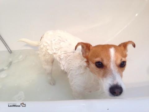 Unser Baderitual und wie oft darf man seinen Hund eigentlich baden?