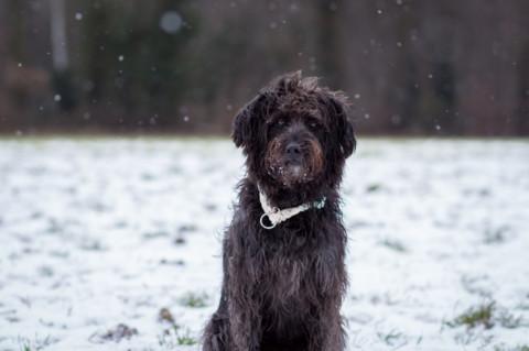 Das sollte man beim spazieren gehen im Schnee beachten