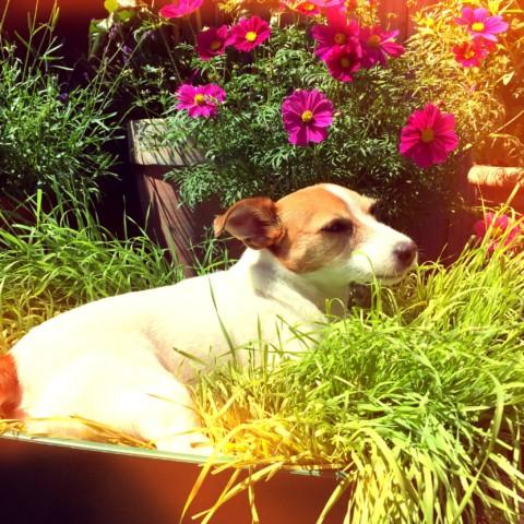 Die Wiese-to-go: Eine Weizengras-Kiste für euren Hund zum selberbepflanzen!