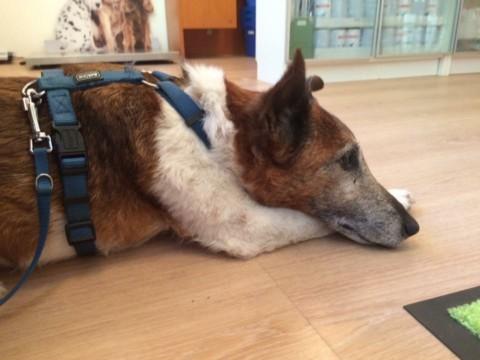 Nett-ikette im Tierarzt Wartezimmer