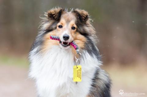 [Produktvorstellung] Was ist mit deinem Hund, wenn dir etwas passiert?