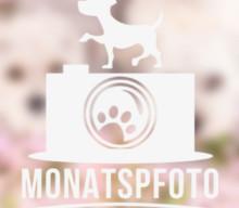 Monatspfoto April