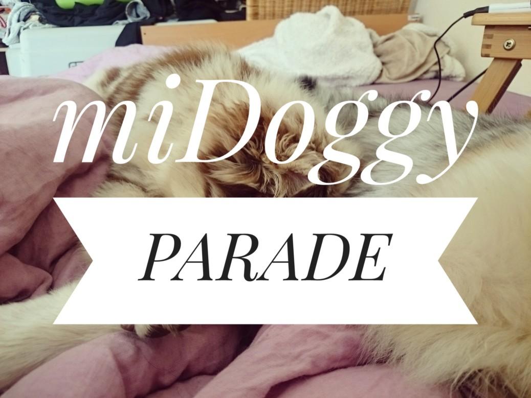 Hunde im Bett