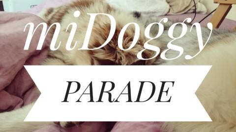Ich kann nicht ohne Hörbuch einschlafen und meine Hunde nicht ohne Gute-Nacht-Geschichte