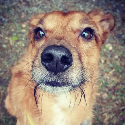 Kinder und Hunde – Der richtige Umgang muss gelernt sein, oder nicht?