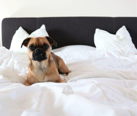 Bloggerparade: Hund im Bett Ja oder Nein?