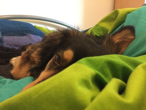 Hund im Bett – Ja oder Nein