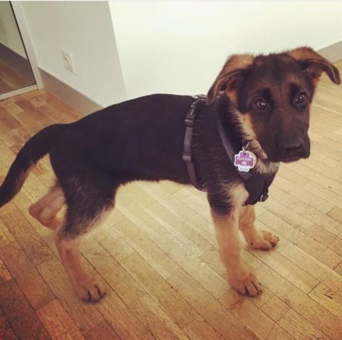 Ein Hund im Büro?!I