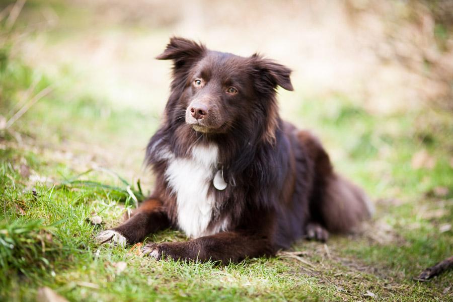Der geliehene Hund