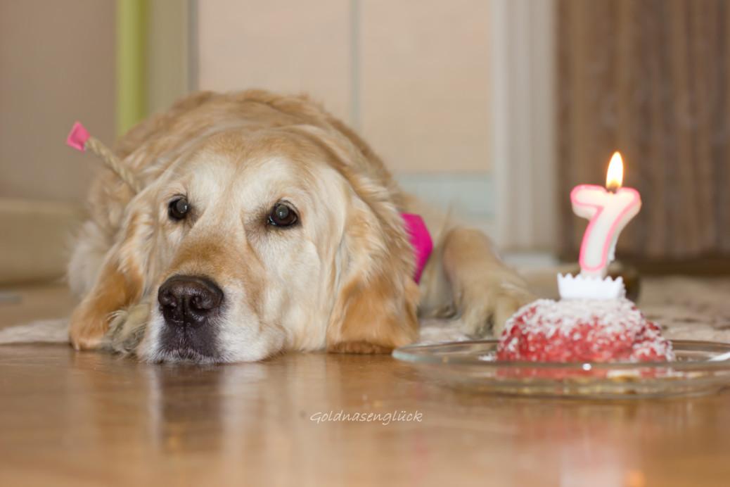 Geburtstagstorte für den Hund selbermachen
