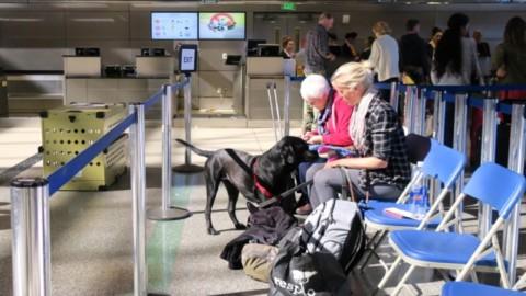 Fliegen mit Hund im Frachtraum: Was passiert am Flughafen?