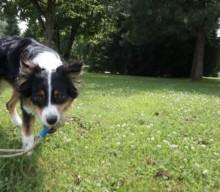 Entwurmung beim Hund – wie wir es machen