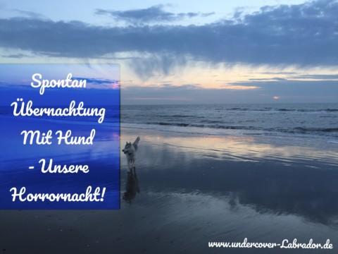 Spontan Übernachtung mit Hund – Unsere Horrornacht!