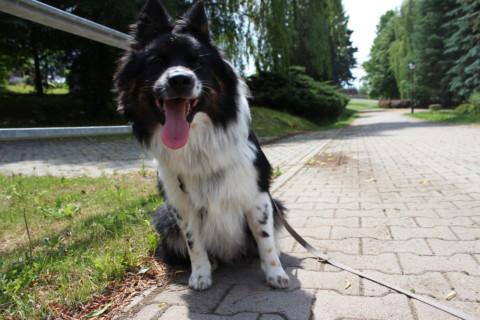 Man bekommt den Hund den man braucht – Blogparade