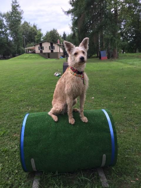 Das Sportgerät Hund