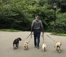 Reisen ohne Hund – Frauchen alleine in New York