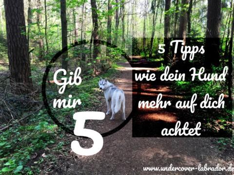 5 Tipps wie dein Hund mehr auf dich achtet