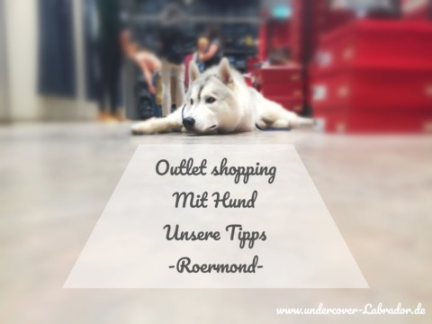 Outlet Shopping mit Hund – Unsere Tipps – Roermond