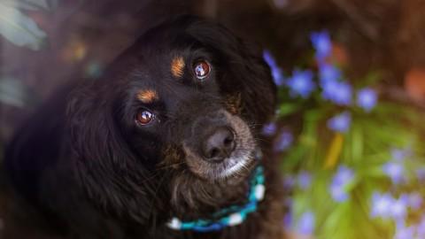 Hund und Vollzeitjob – wie geht das?