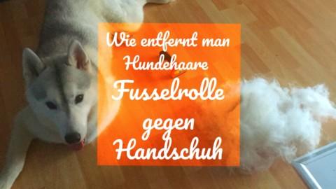 Wie entfernt man Hundehaare? Test Fusselrolle gegen Handschuh