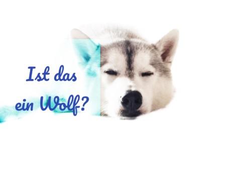 Ist das ein Wolf?