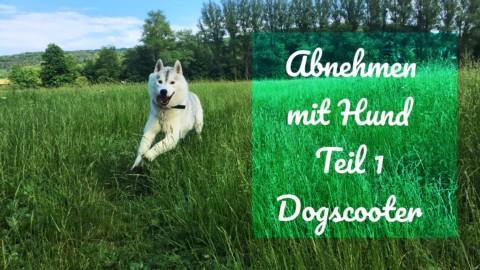 Abnehmen mit Hund – Teil 1 Dogscooter