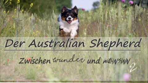 Der Australian Shepherd – zwischen Wunder und Wahnsinn II
