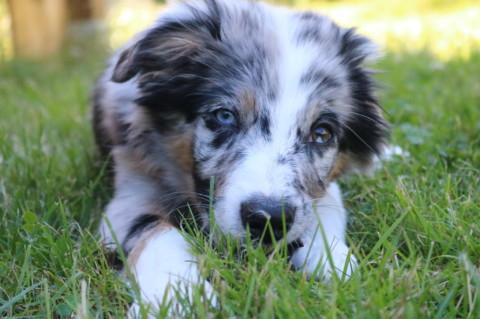 Aus dem Welpen wird ein Junghund… 4 Monate