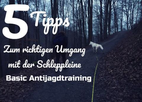 5 Tipps zum richtigen Umgang mit der Schleppleine – Antijagdtraining Basic
