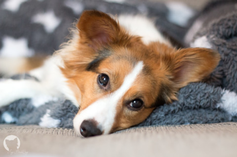 """""""Say Cheese!"""" – Wie mit kleinen Hilfsmitteln schöne Hundeaufnahmen gelingen"""